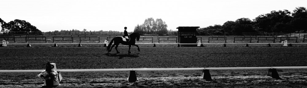 Rachel Williamson Dressage